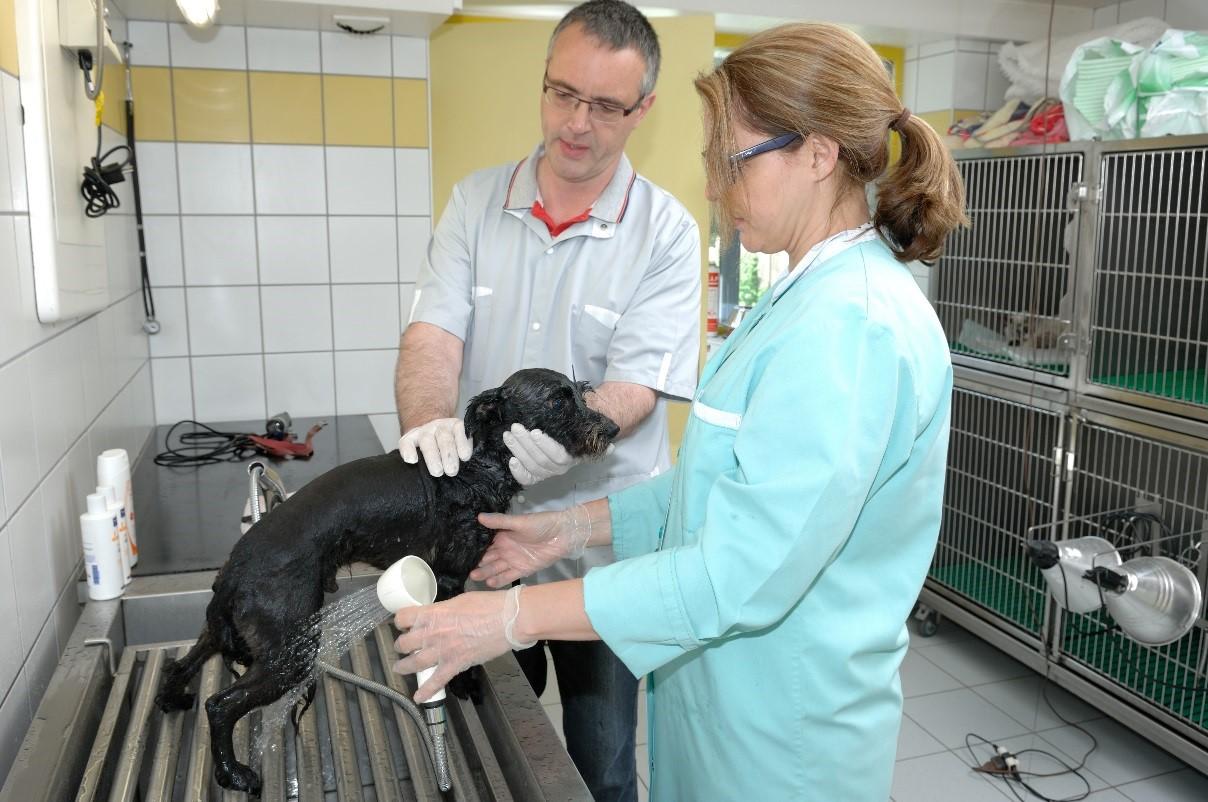chenil vétérinaire pontivy