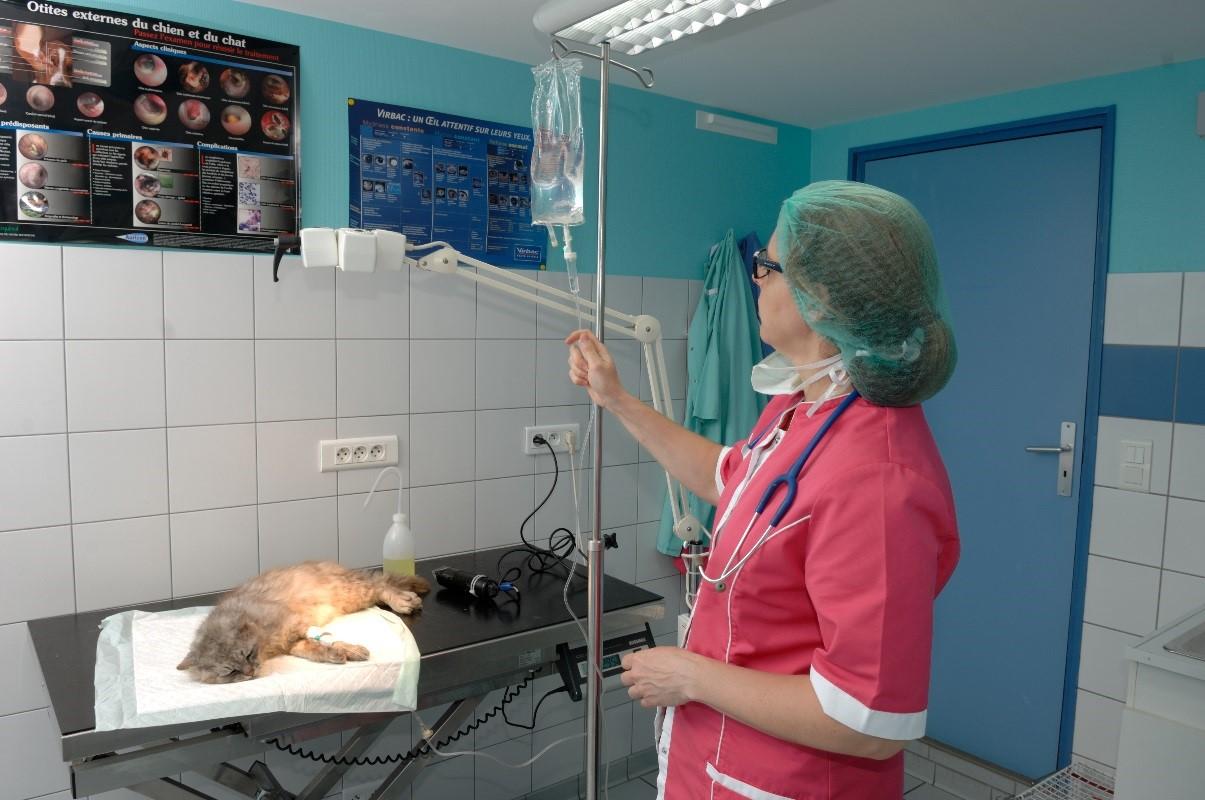 chirurgie vétérinaire pontivy